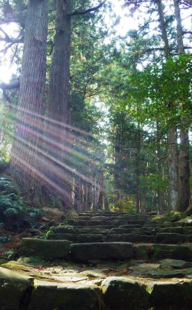 light-on-the-path